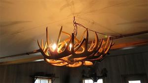 Genuine White Tail Deer Antler Chandelier - Single Tier