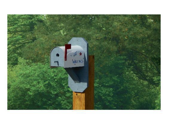 Amish Mailbox-Style Wren Bird House